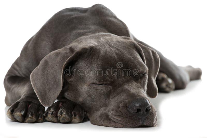 psi śpi zdjęcia royalty free
