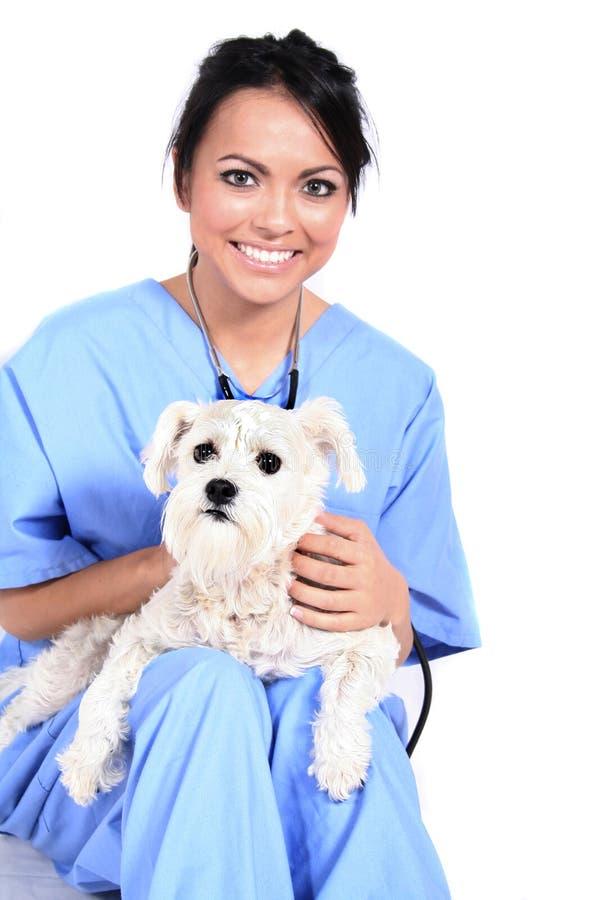 psi żeński pracownik opieki zdrowotnej obrazy royalty free