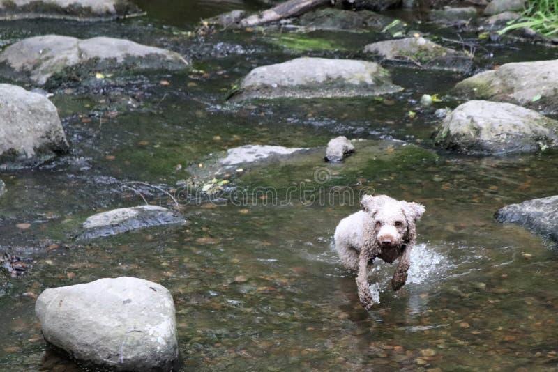 Psi bawić się w wodzie na letnim dniu zdjęcia royalty free