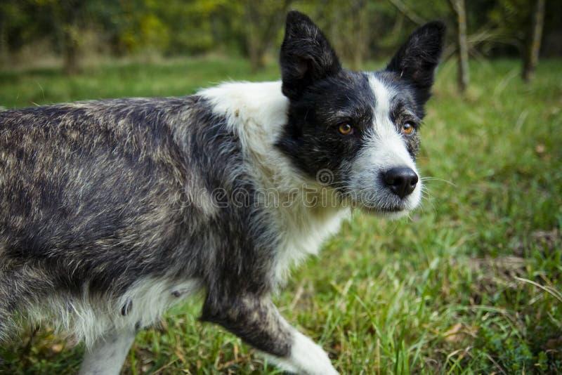 psi bezpański zdjęcie stock