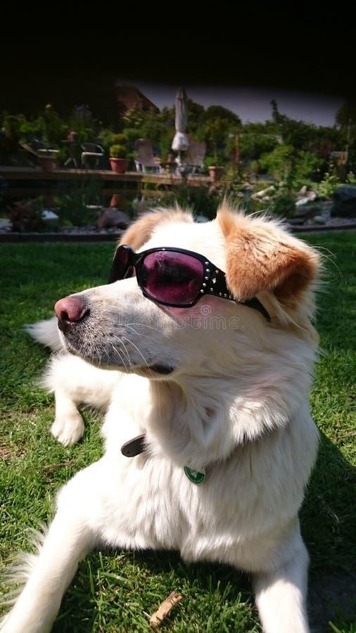 Psi chłód @ słoneczny dzień obrazy stock