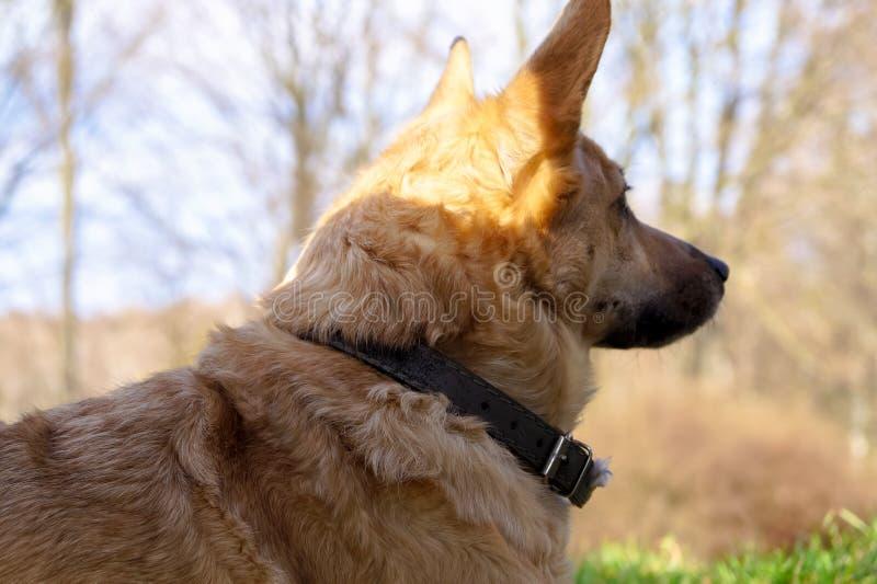 Psi dopatrywanie świat iść obok obrazy royalty free