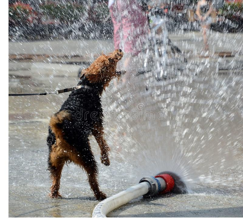 Psi doskakiwanie w wodzie fotografia royalty free
