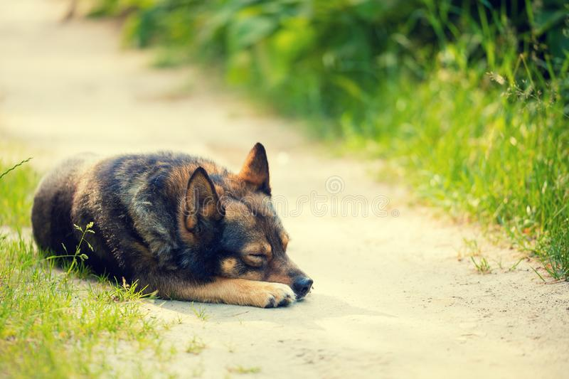 Psi dosypianie na drodze gruntowej zdjęcie stock