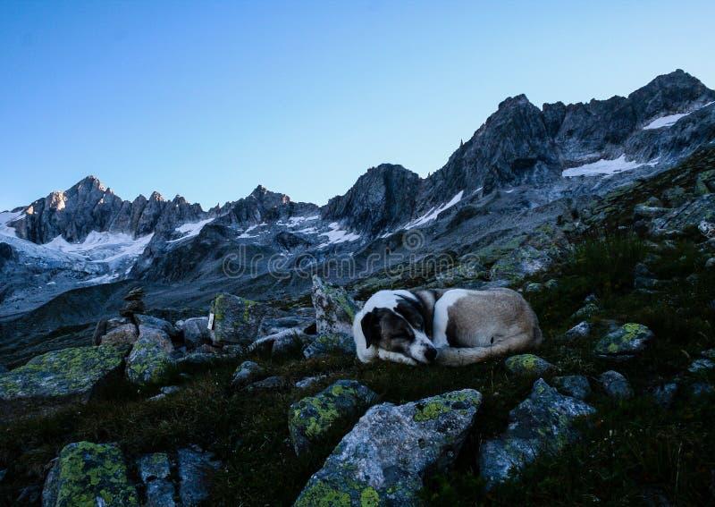 Psi dosypianie w scenicznym pasmie górskim obrazy royalty free