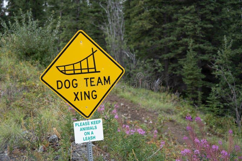 Psi Drużynowy Xing - Psi sanie drużyny krzyżować drogowy podpisuje wewnątrz Alaska fotografia royalty free