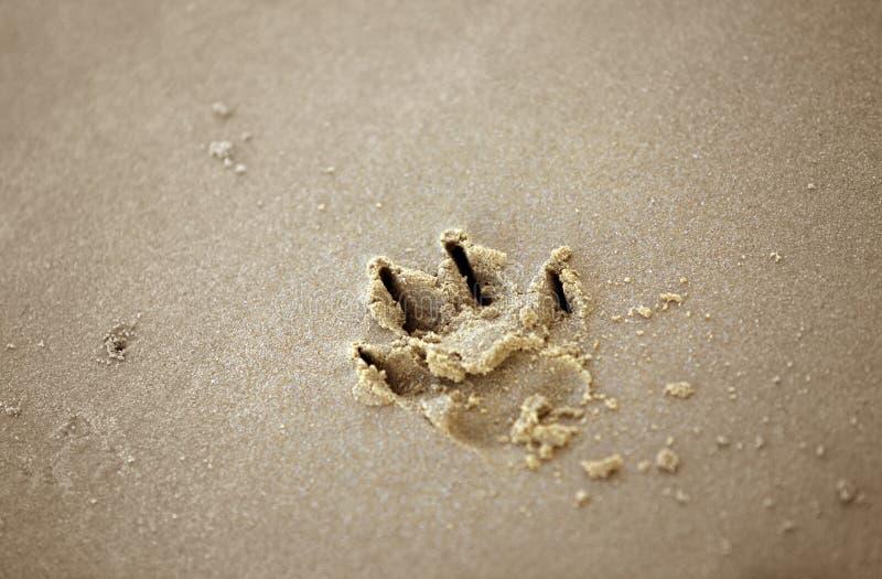 Download Psi druku łapę piasku obraz stock. Obraz złożonej z wakacje - 57674905