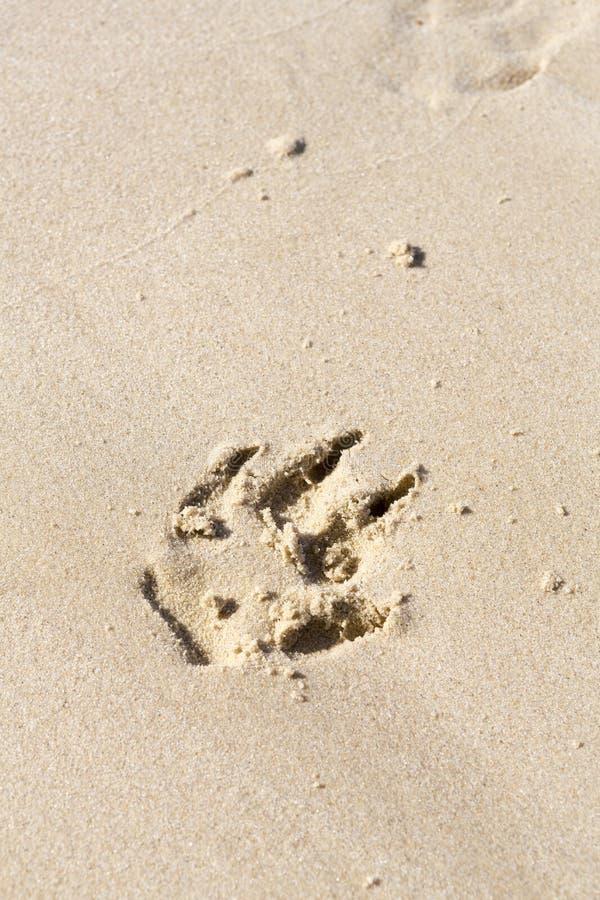 psi druku łapę piasku fotografia stock