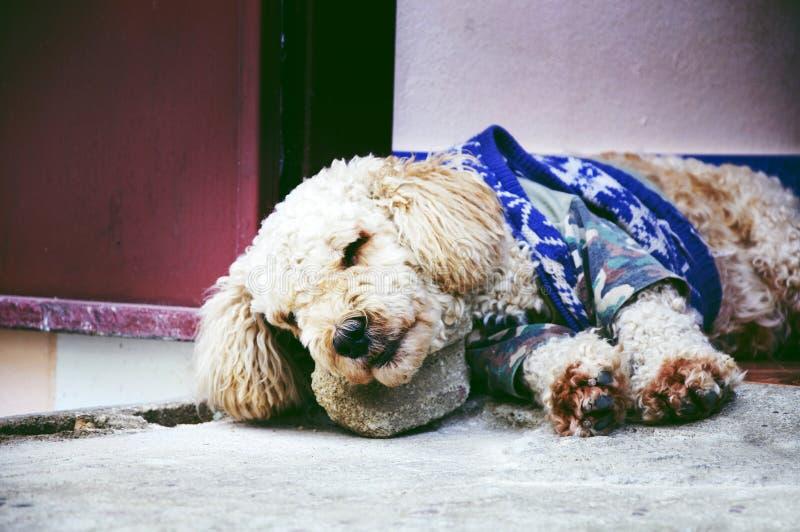 Download Psi gnuśny zdjęcie stock. Obraz złożonej z ssak, śmieszny - 13327512