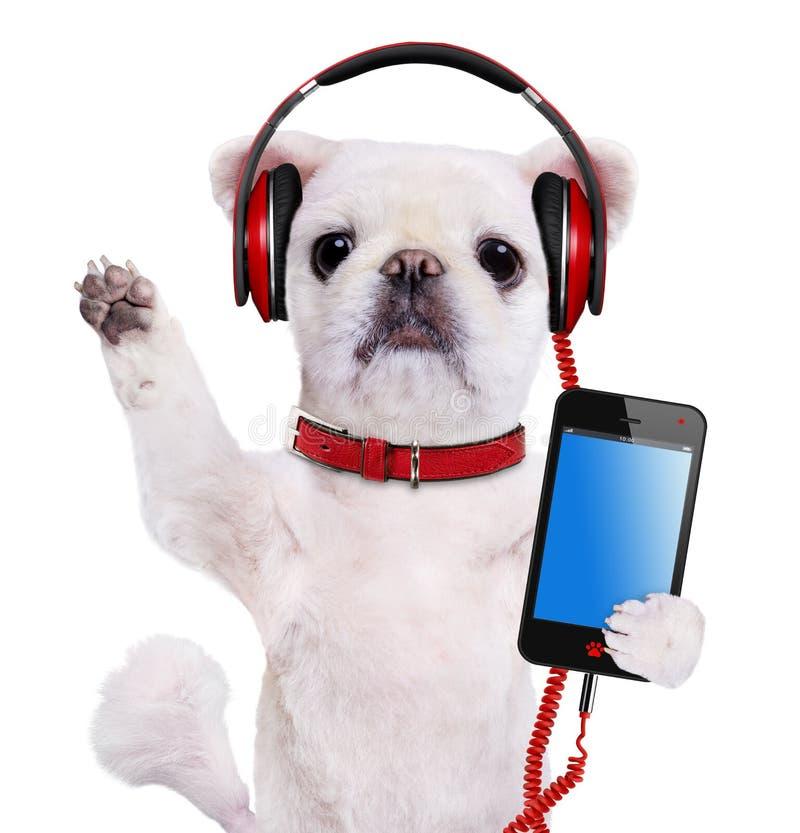 Psi hełmofony obrazy royalty free
