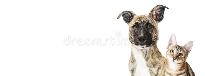 Psi i figlarka zbliżenia bielu sztandar fotografia stock