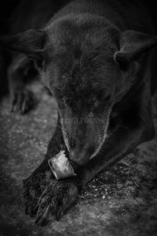 Psi i kość obraz stock