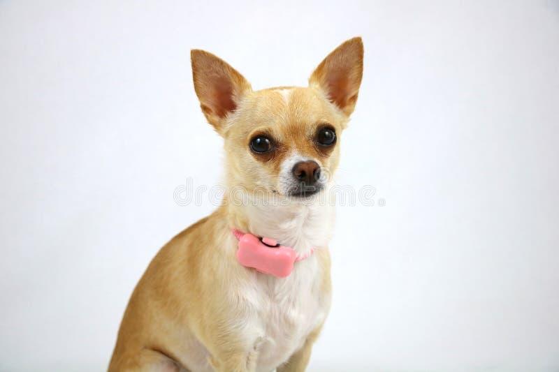 Psi Jest ubranym aktywność tropiciel obraz stock