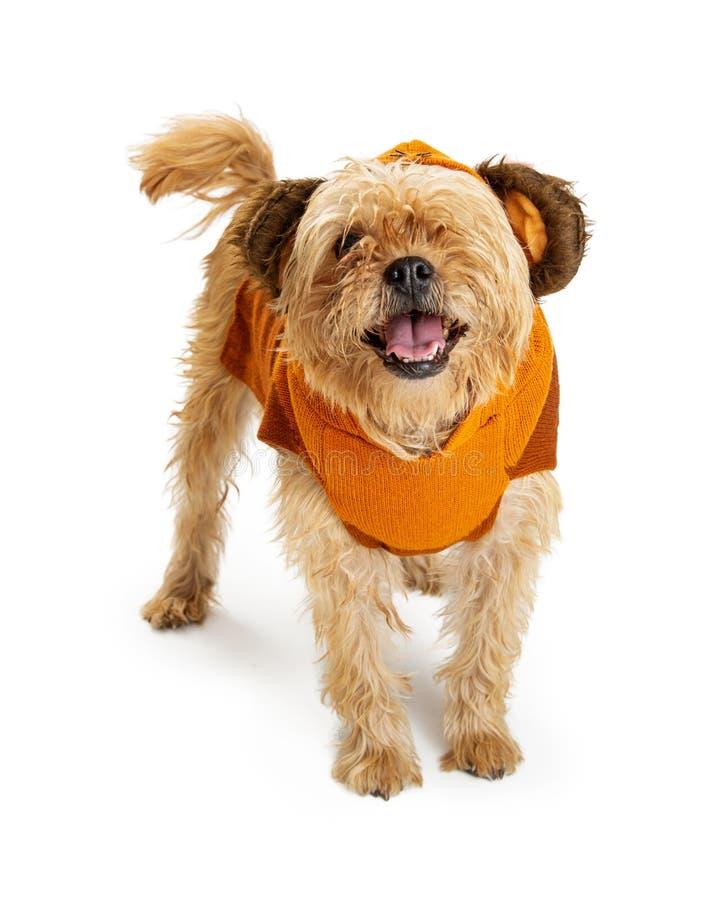 Psi Jest ubranym Niedźwiadkowy Halloweenowy kostium obraz royalty free