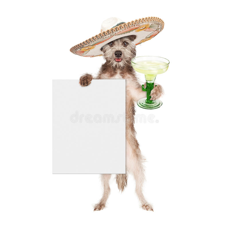 Psi Jest ubranym sombrero Trzyma Margarita i znaka obraz stock