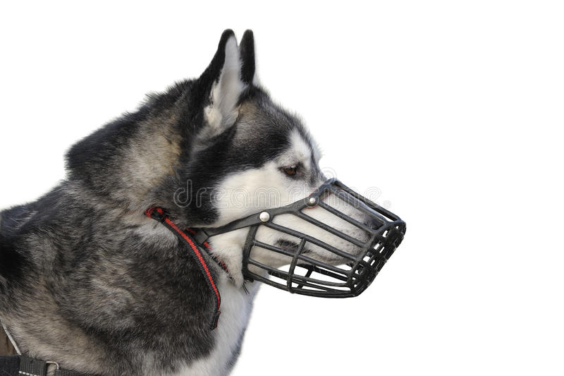 psi kaganiec zdjęcia stock