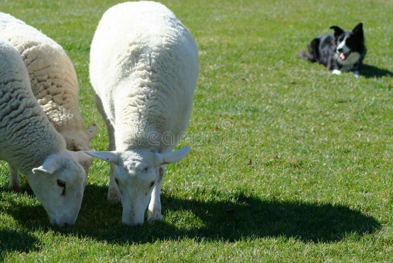 psi klasy działania zdjęcie stock