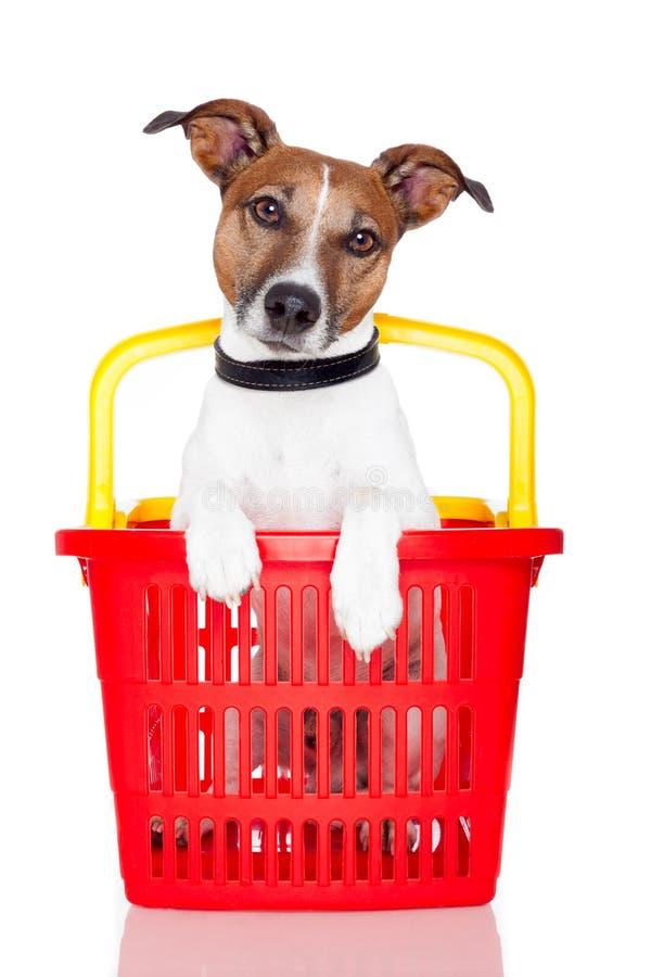 psi kosza zakupy obraz royalty free