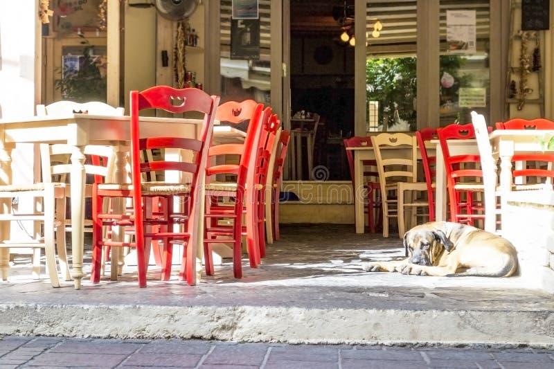 Psi lying on the beach na bruku przy kawiarnią obrazy royalty free
