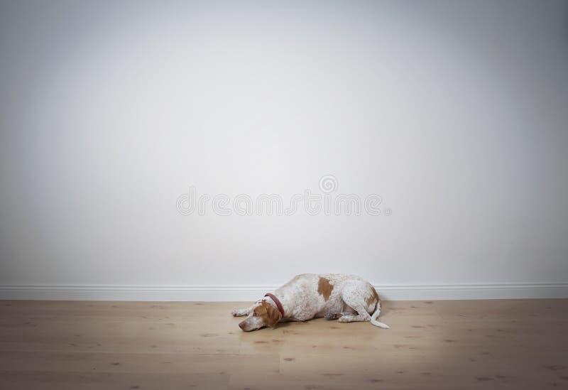 Psi lying on the beach na podłogowej przestrzeni dla teksta zdjęcie stock