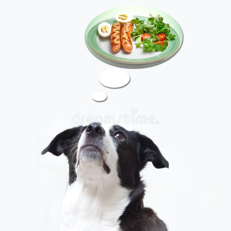 Psi marzyć o jedzeniu obraz stock