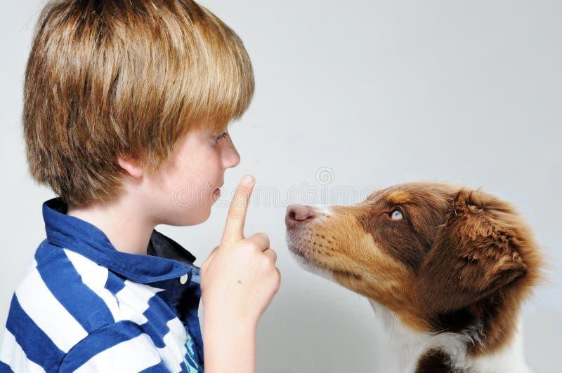 Psi nauczanie obraz stock