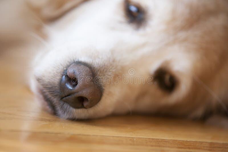 psi nos, zdjęcia stock