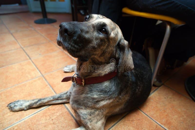 Psi obsiadanie w zwierzę domowe życzliwym barze fotografia stock