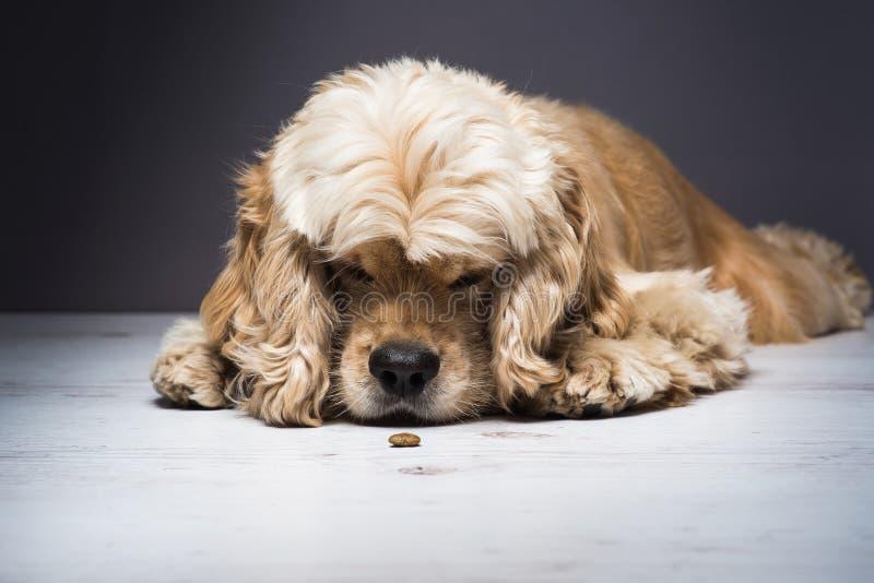 Psi obwąchanie odór jedzenie zdjęcia stock