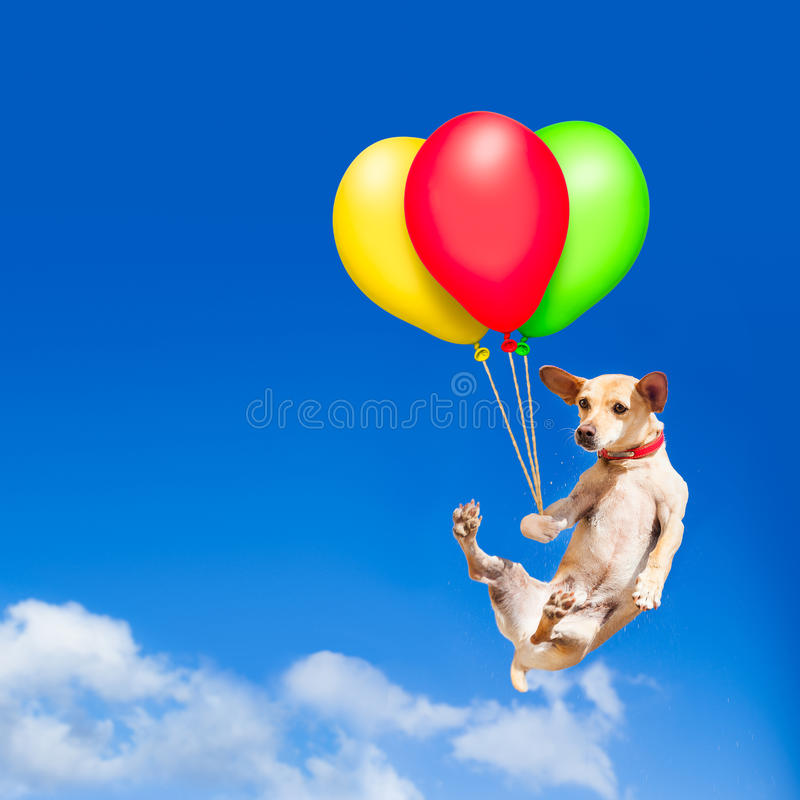 Psi obwieszenie na balonie w powietrzu obrazy stock