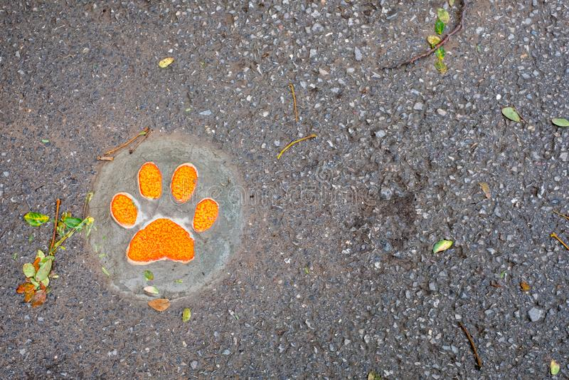 Psi odcisk stopy krok po kroku na ziemi obrazy royalty free