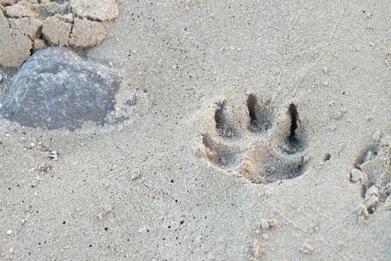 Psi odcisk stopy na piasek plaży z morze skały bagna i tłem fotografia royalty free