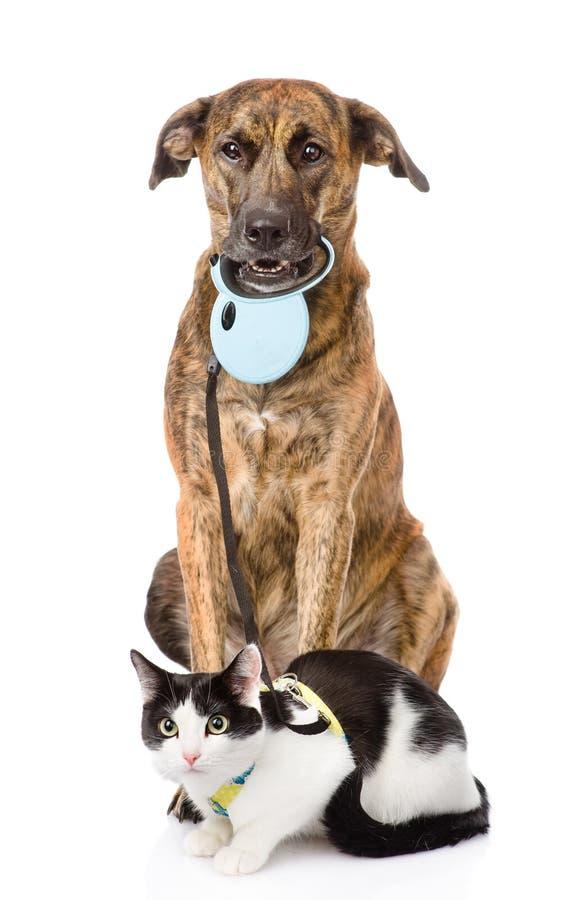 Psi odprowadzenie kot na smyczu Na białym tle zdjęcia stock