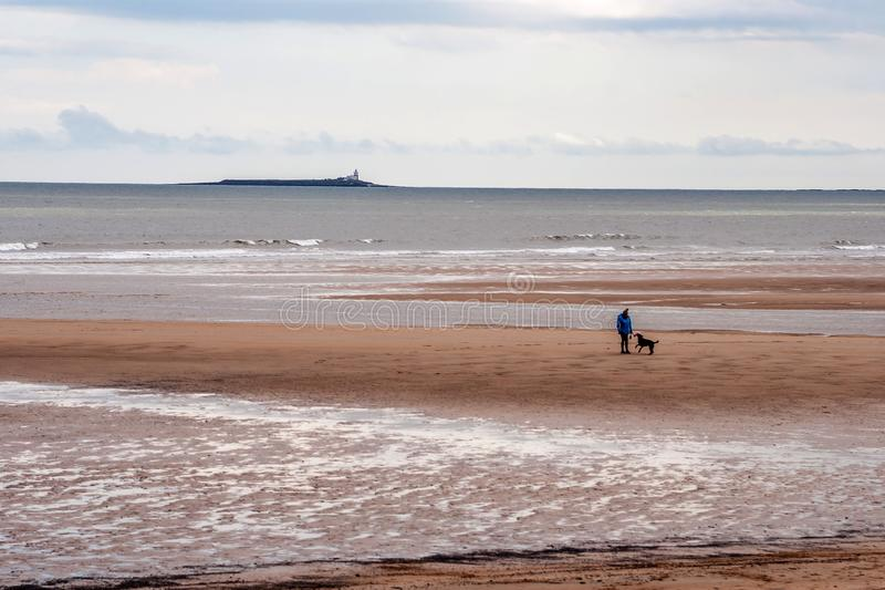 Psi odprowadzenie na Alnmouth plaży obraz royalty free