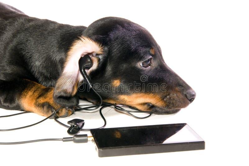 psi odtwarzacz mp3 zdjęcie stock