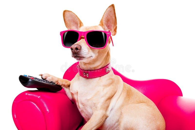 Psi ogląda tv na leżance zdjęcia stock