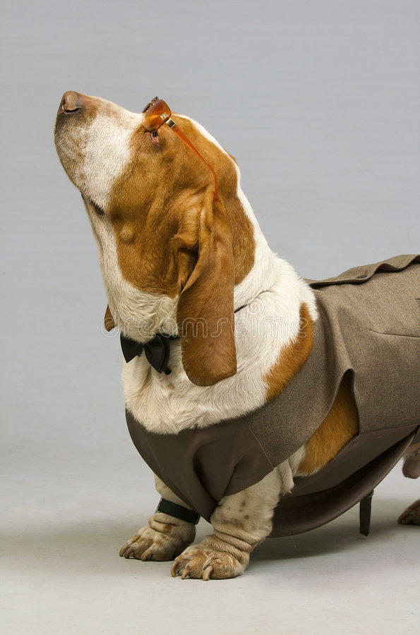 psi okulary eleganckie zdjęcie royalty free
