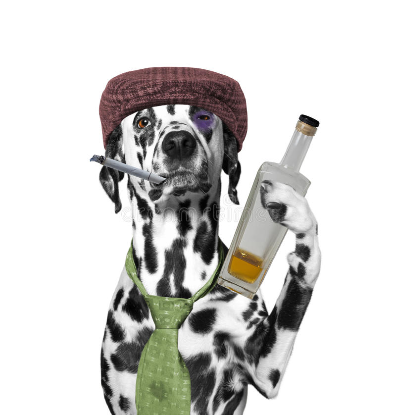 Psi opój trzyma papieros i butelkę alkohol obraz royalty free