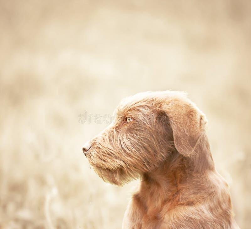 psi osamotniony zdjęcie royalty free