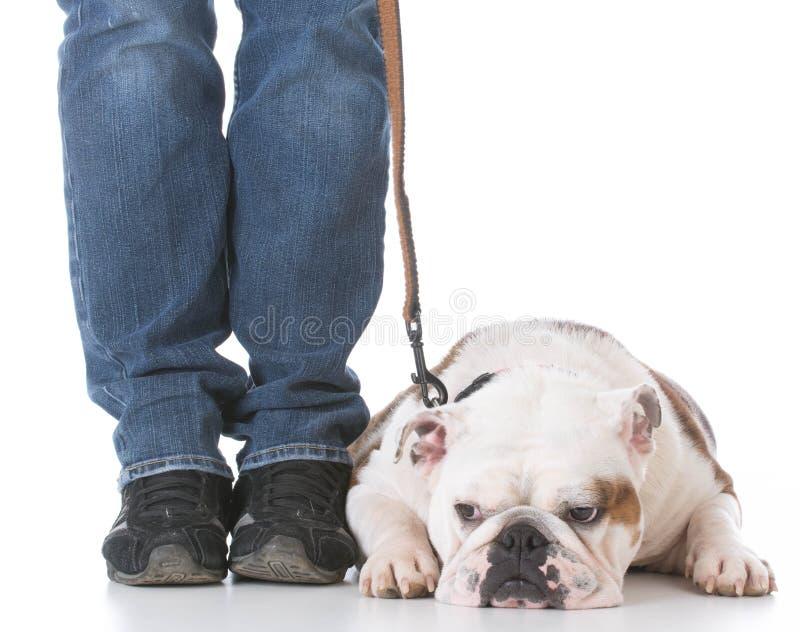 Psi posłuszeństwa szkolenie obrazy stock