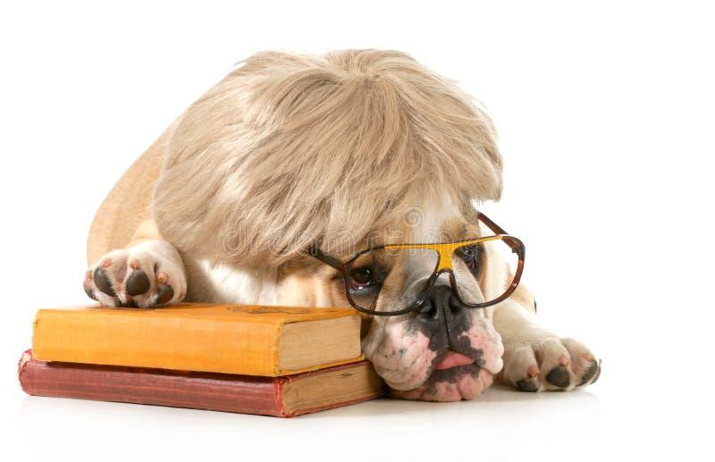 Psi posłuszeństwo obraz stock