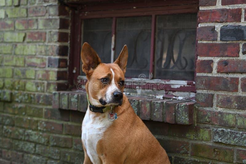 psi poważnie zdjęcia stock