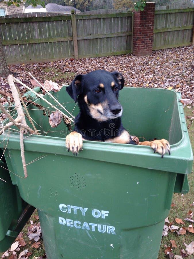 Psi powitalny spadek zdjęcie stock