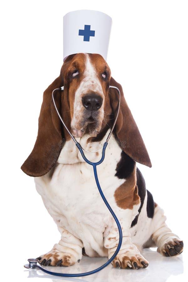 Psi pozować jako lekarka zdjęcie royalty free