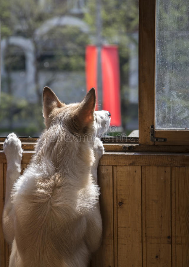 Psi przyglądający out zdjęcie royalty free