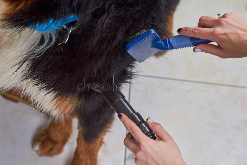 Psi przygotowywać makro-, kobiet ręki obraz royalty free
