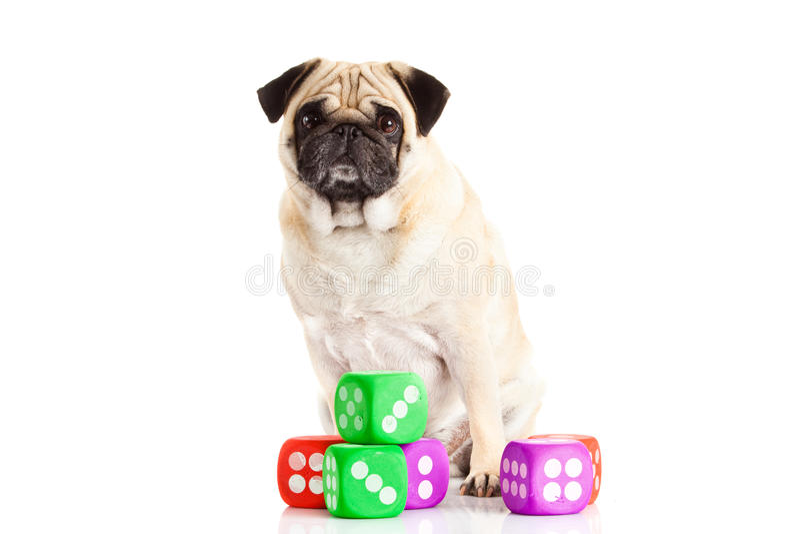 Download Psi Pugdog Odizolowywający Na Białym Tle Dices Zabawkarskiego Zwierzęcia Domowego Zdjęcie Stock - Obraz złożonej z odosobniony, jeden: 53785802