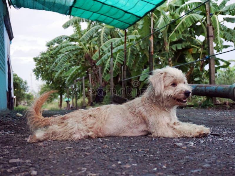 Psi relaksuje odpoczywać lub spać fotografia stock
