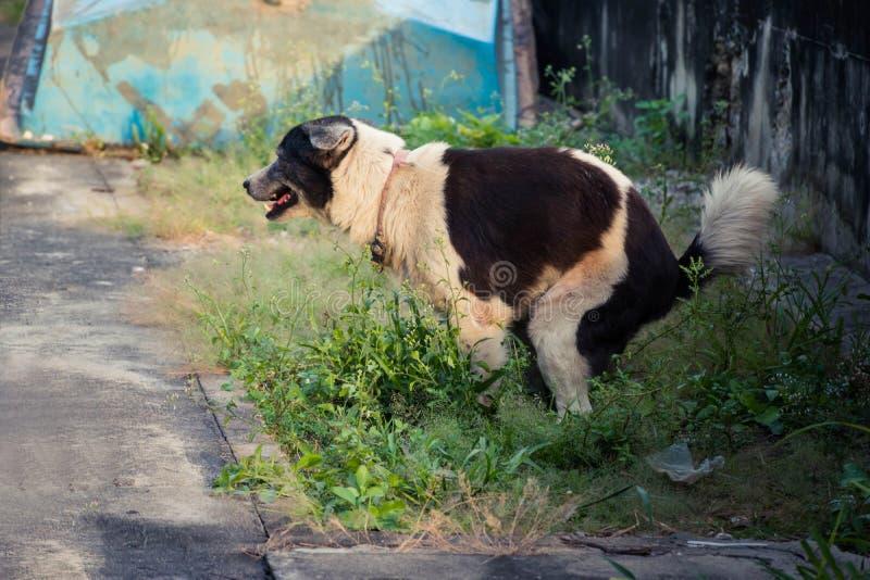 Psi rufowanie plenerowy zdjęcie stock