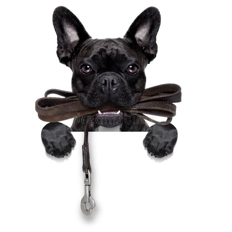 Psi rzemienny smycz zdjęcia stock